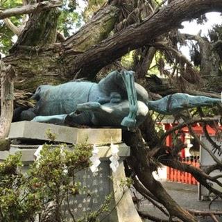 賀茂神社の神馬