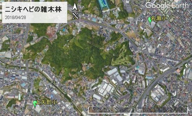 戸塚区名瀬町・上矢部町の雑木林